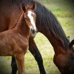 chevaux_et_cavaliers_bienvenue